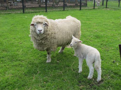 необходимость знакомства детей с животными